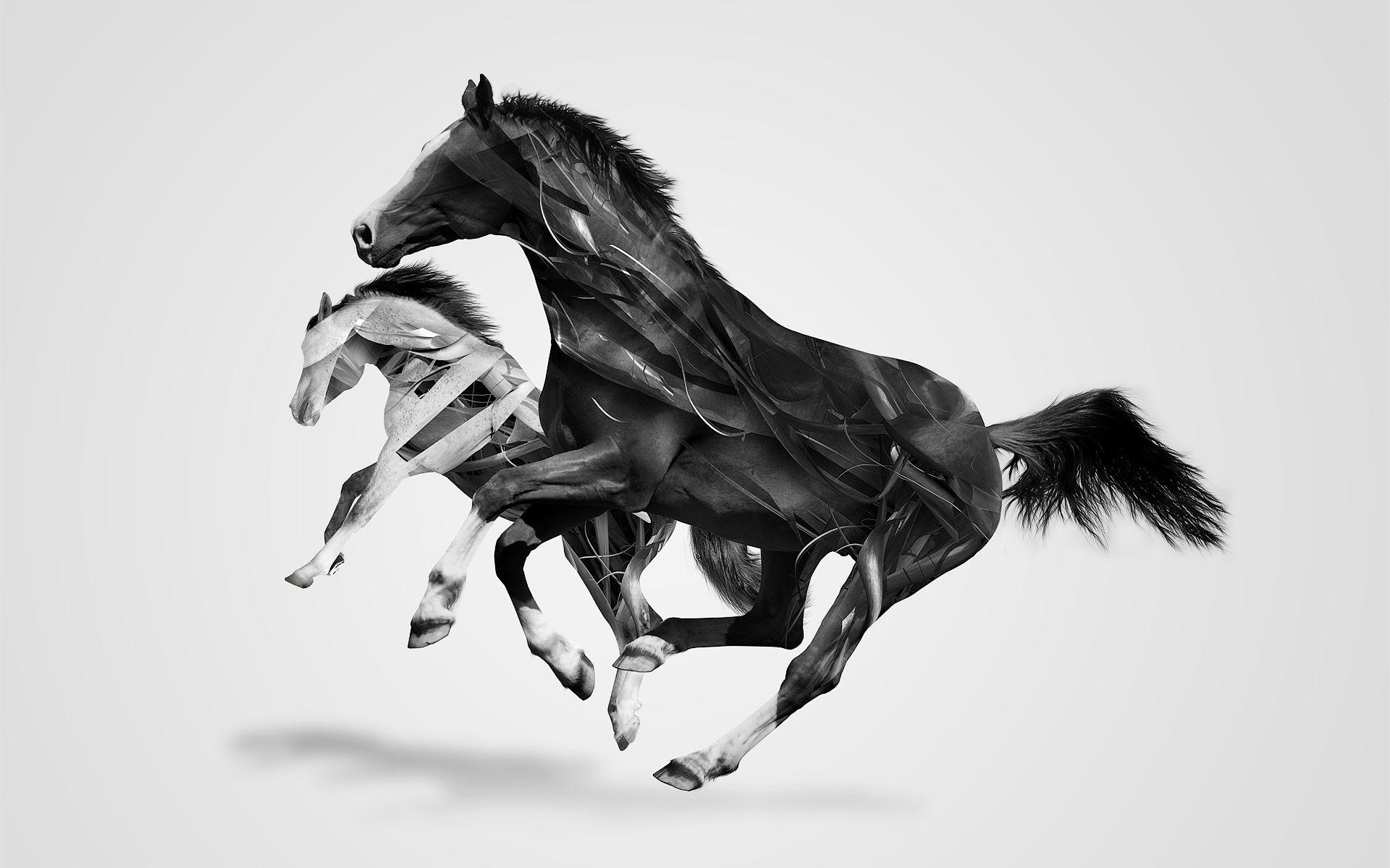 Fantastic Wallpaper Horse Collage - 3dcc54e5b4f5635d3b6580a5ebfc7d87  Collection_266869.jpg