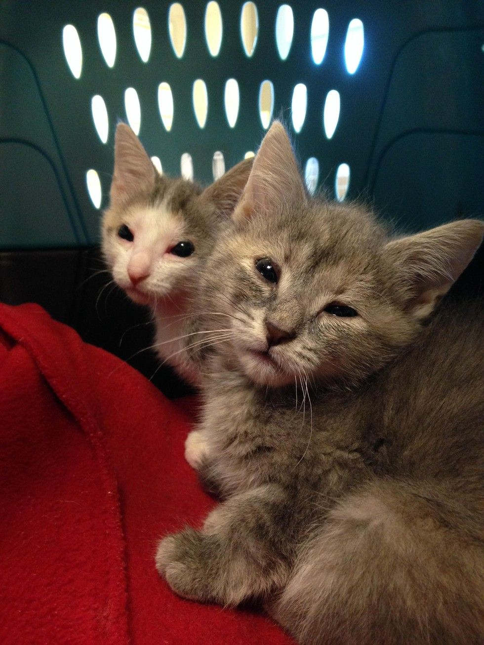 Help 2 Homeless Kittens Born Without Eyelids Get Lifesaving Surgery Kittens Brave Animals Cats And Kittens