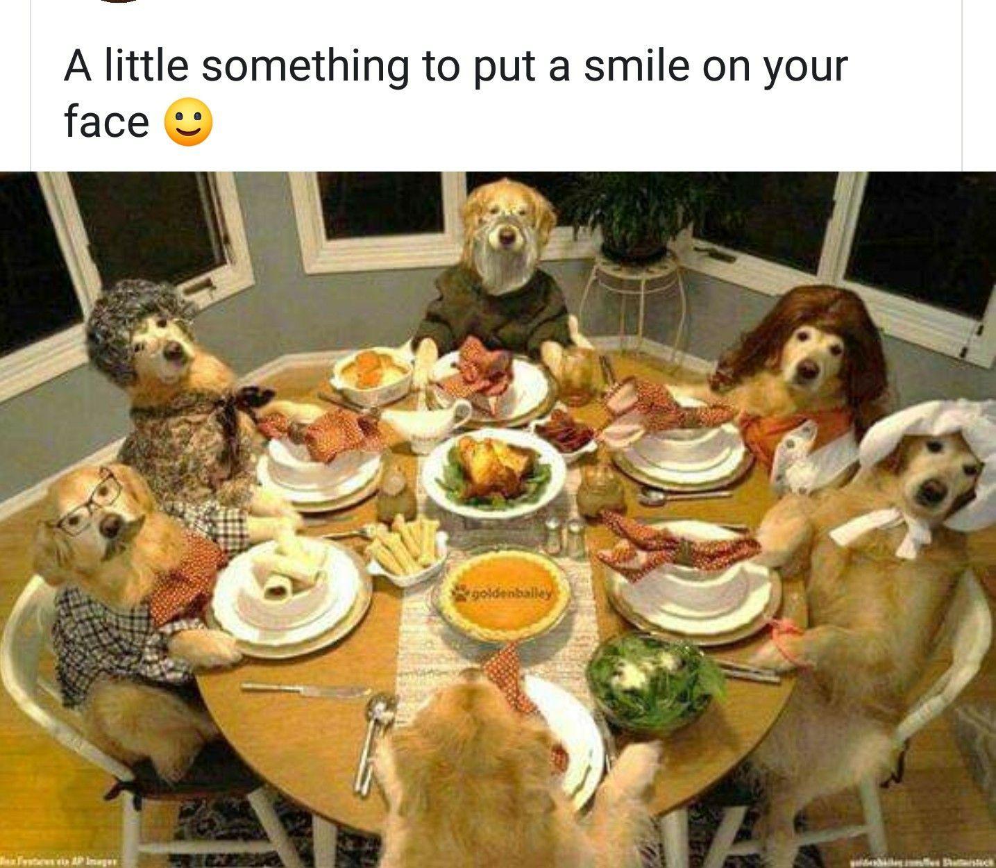 Dogs Meme Thanksgiving Dog Thanksgiving Dog Thanksgiving Pictures Golden Retriever Thanksgiving