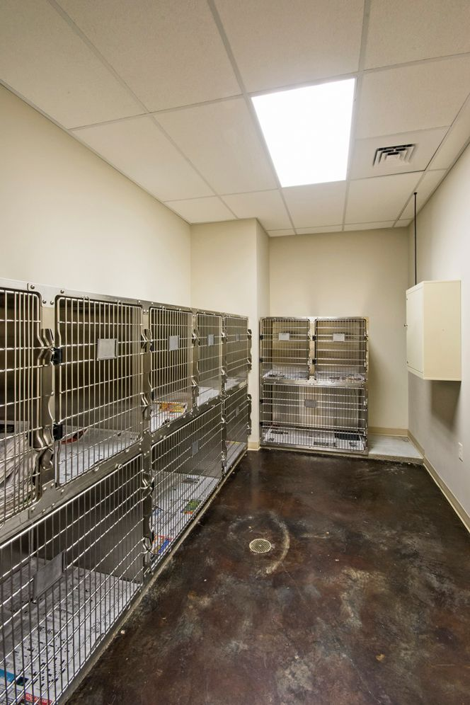 Dog Ward Alternate View Hospital Design Hospital Design Clinic Design Pet Clinic
