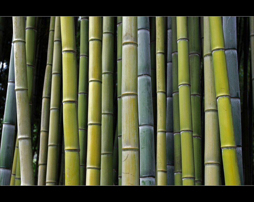 Pin By Sandrobernasconi Architektur G On Garten Bepflanzungen Ikea Bamboo Modern Home Furniture