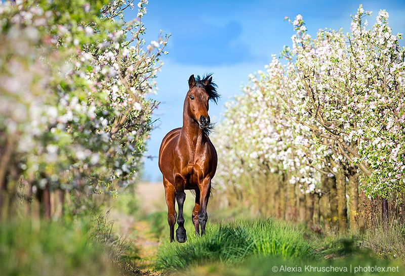 Фотографии свободные лошади либерти лошади в движении ...