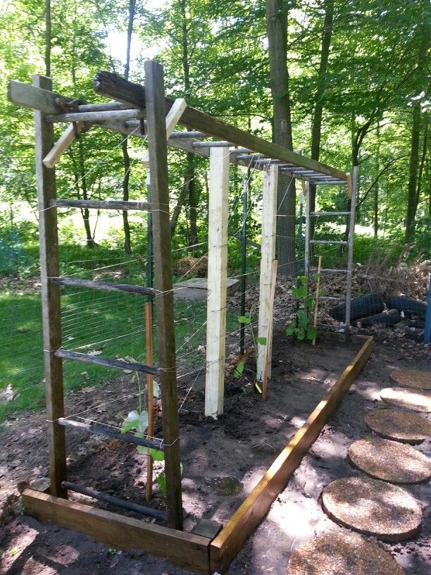 Use Old Ladders To Make Grapevine Trellis.