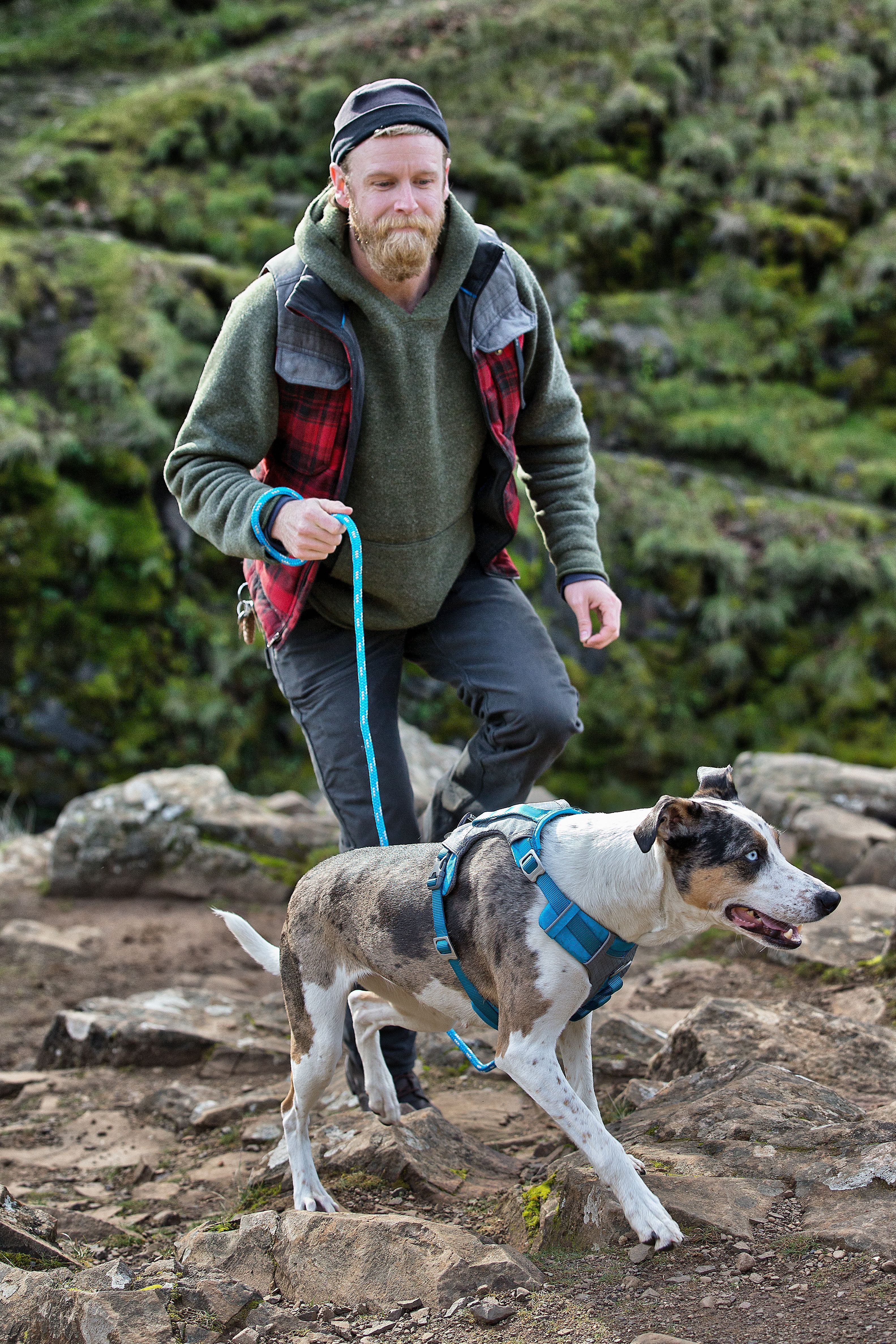 Journey Air Dog Harness Dog Harness Dog Activities Hiking Dogs