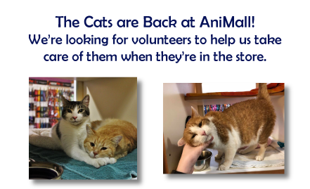 Want To Be A Part Of Animall Animal Rescue Pet Adoption Animals