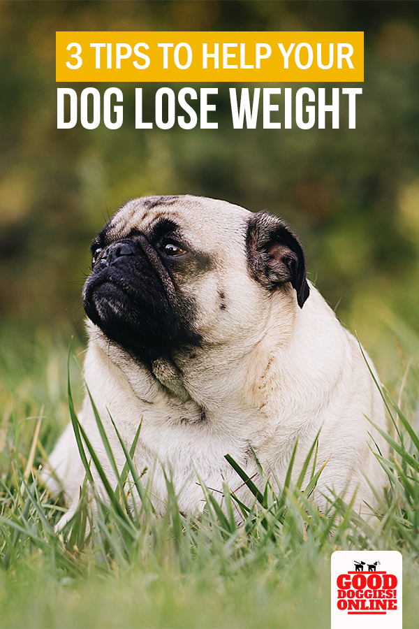 3dd1a5a8a2dfdee763cfec1713afce0b - How To Get My Overweight Dog To Lose Weight