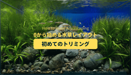 トリミング 水草