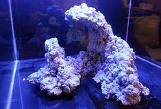 Aquascape Sculptures Gallery Designs Reef Tank Aquascape Design Aquarium Design