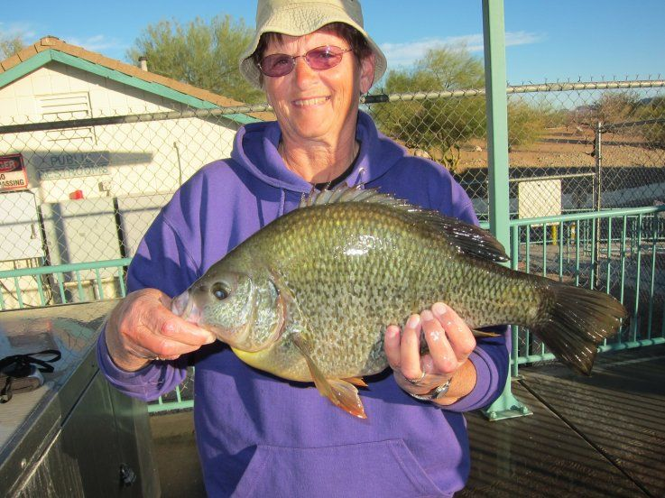 Redear sunfish another monster redear sunfish caught out for Lake havasu fishing