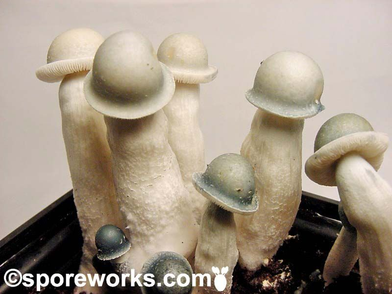 """Interesting"" Shaped Mushrooms"