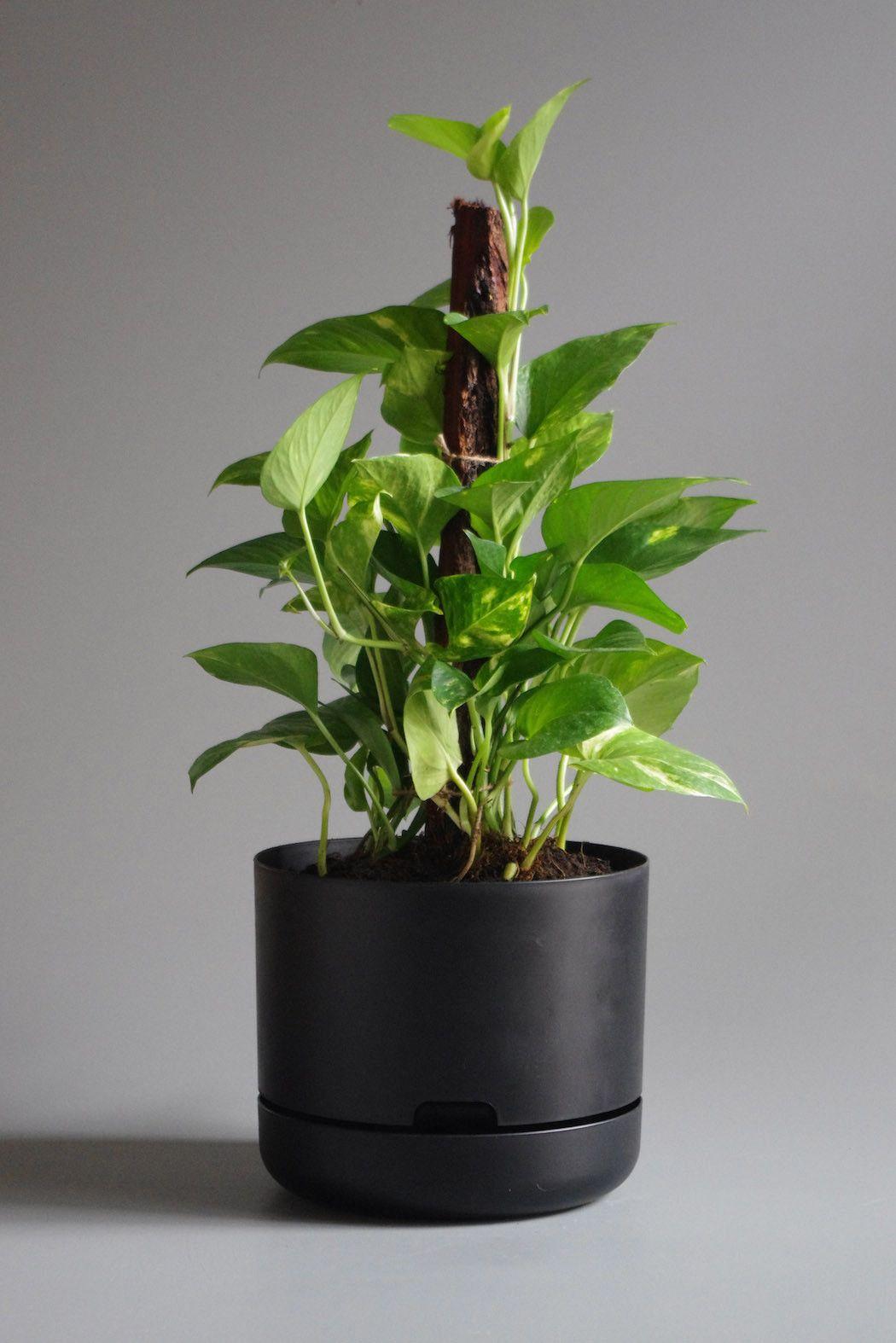 Mr Kitly x Decor Vintage Mid Century Classic Self watering Plant Pot ...