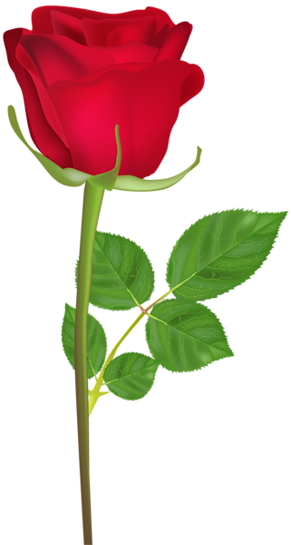Rose With Stem Red Png Clip Art Image Rose Flower Png Rose Flower Pictures Love Rose Flower