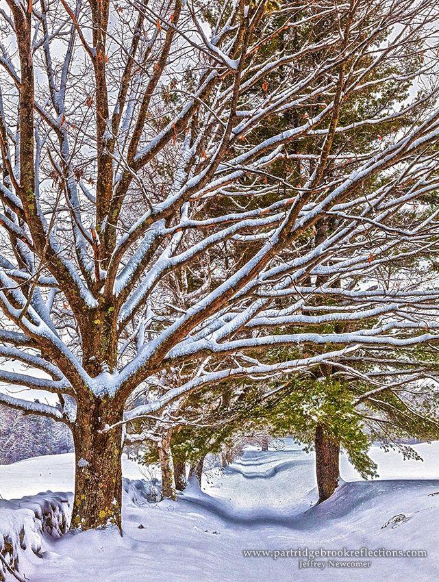 Winter - Snow - Hiver
