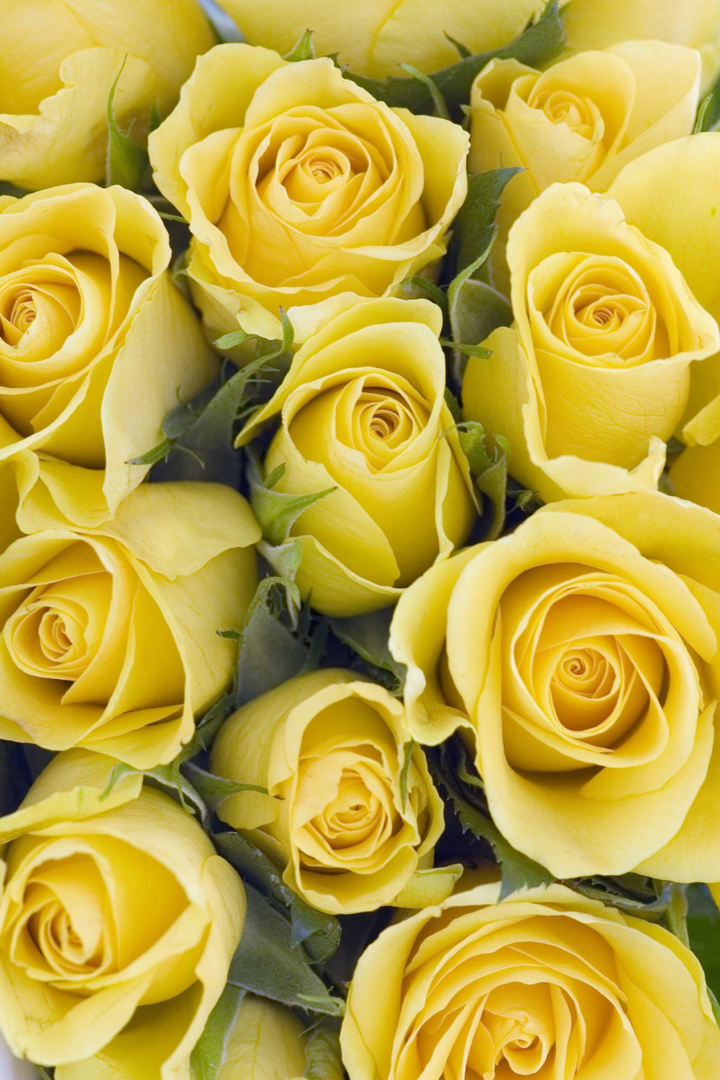 12 Flowers With Hidden Meanings Yellow Rose Bouquet Yellow Roses Yellow Flowers