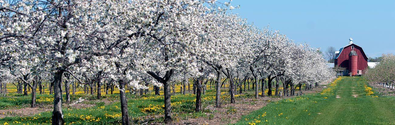 Egg Harbor Cherry Blossoms Google Search Door County Wi Door County Washington Island