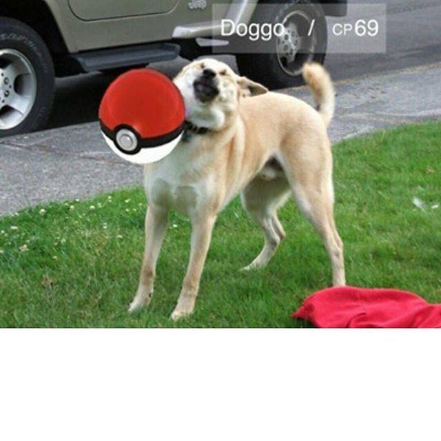 #pokemongo #pokemango #pokeman #pokemon #poke #poketmonsters #pokemansart #pokego #pikachu #pika #покемон #покемонго