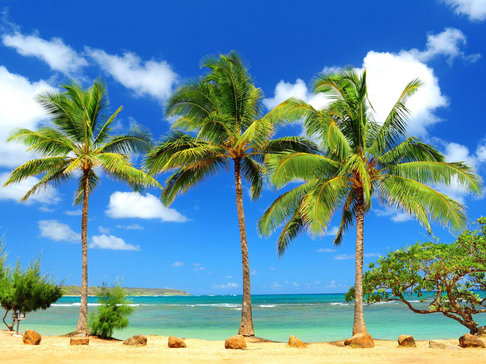 Anahola Palms, Kauai, Hawaii