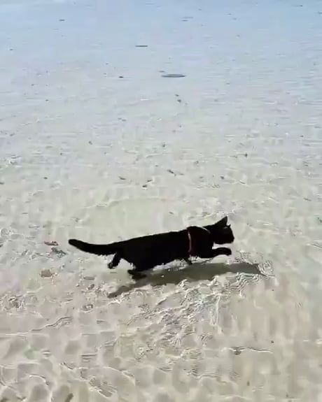 Nathan the beach cat shows off his best dog-paddle