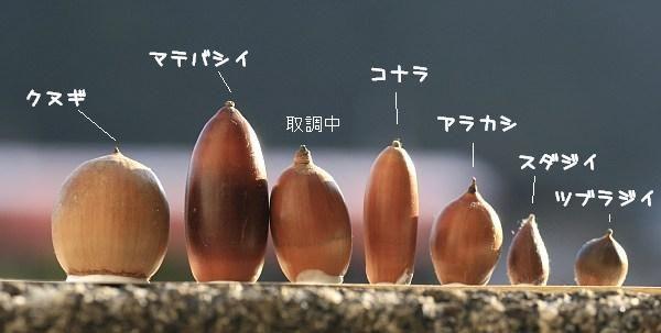 seikurabe2.jpg (600×303)