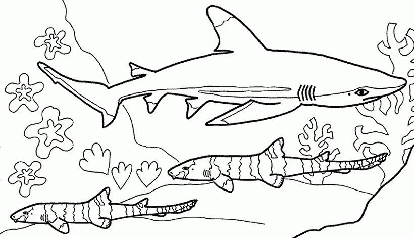Dibujos Para Colorear De Tiburones Shark Coloring Pages Shark