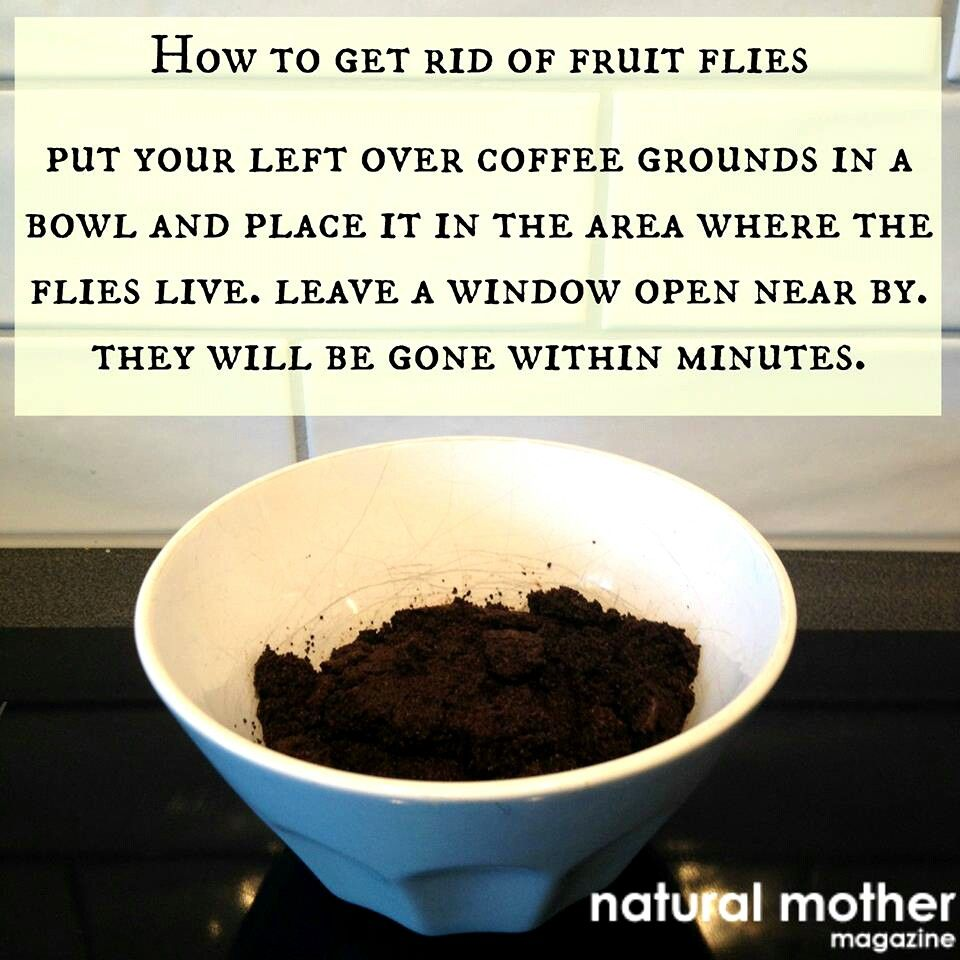 Fruit fly remedy keep it clean pinterest fly remedies