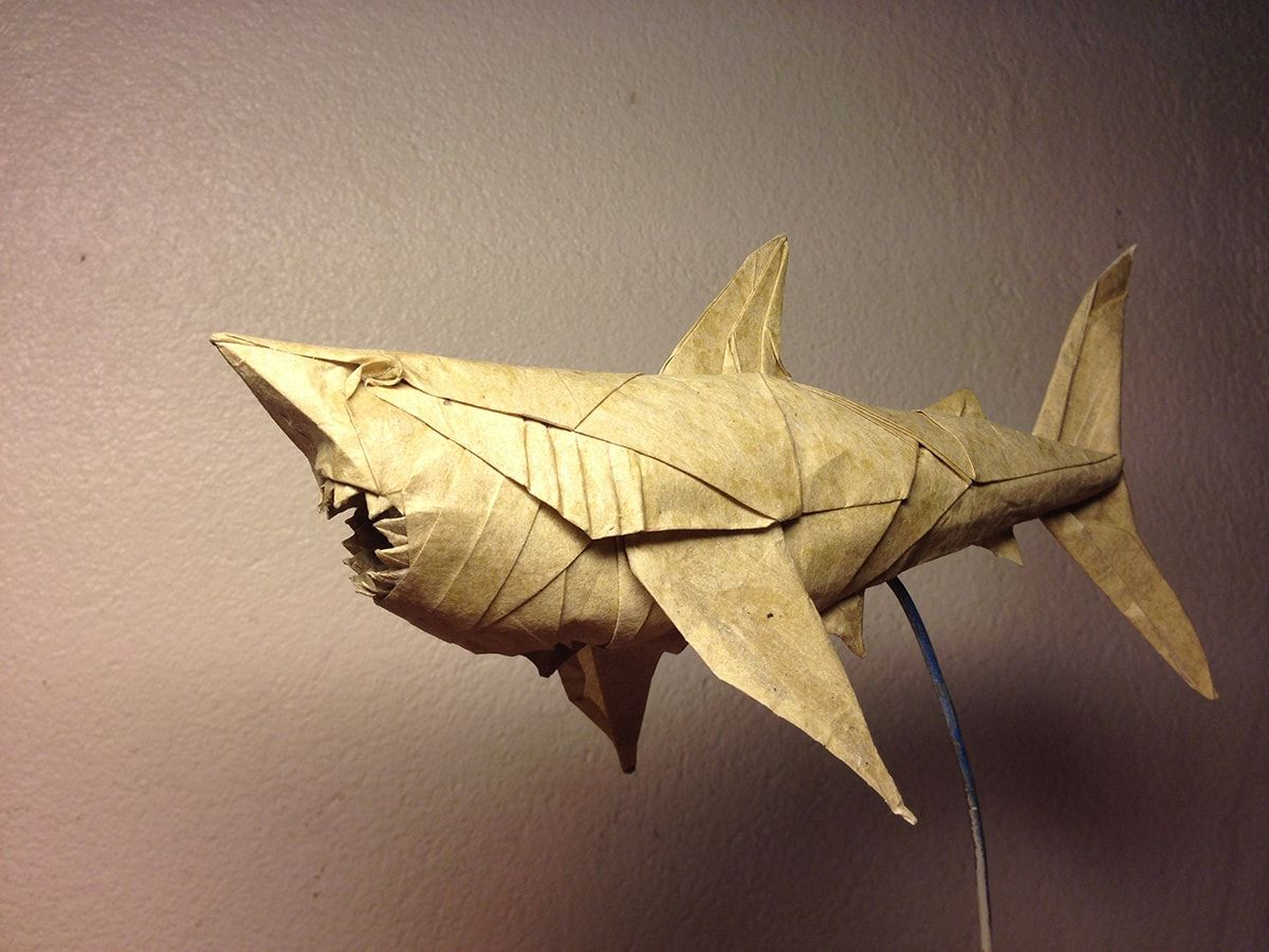 Magnificent Origami Sharks To Celebrate Shark Awareness Day Diagram Great White By Nguyn Hng Cng