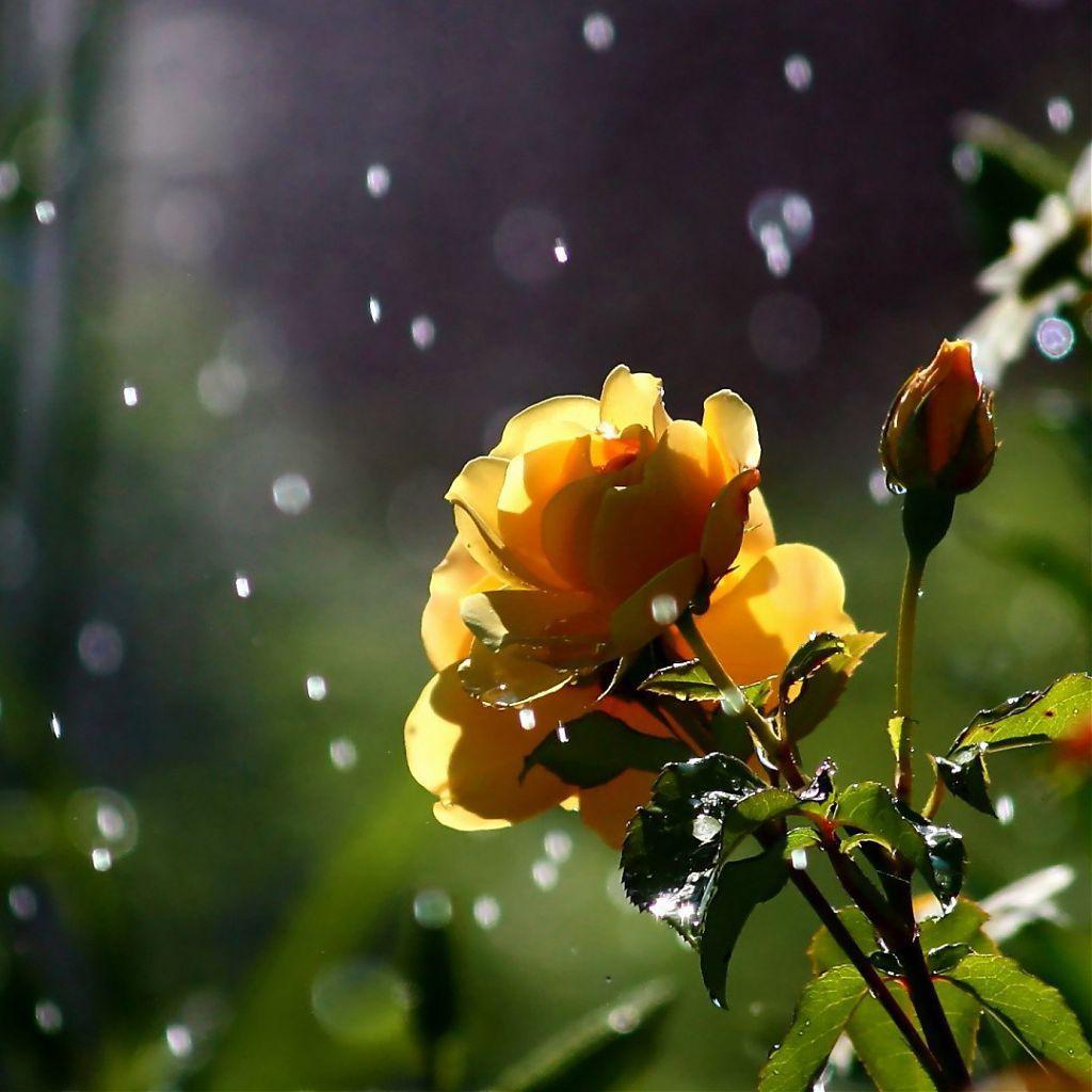 Resultado de imagem para красивый дождь обои