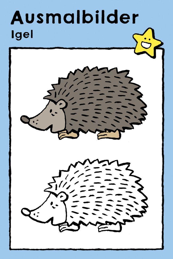 Igel - kiddimalseite  Igel ausmalbild, Malvorlagen tiere, Igel