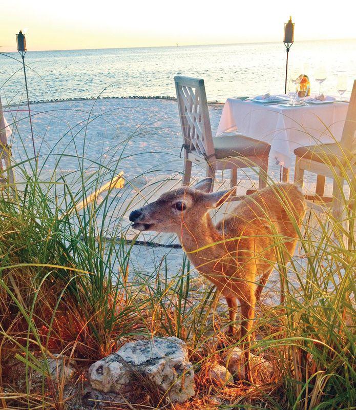 Little Palm Island Resort & Spa - Key Deer - Weekend Getaway on a ...