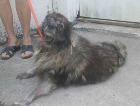 Neglected Dog Found Not One Person Has Shown That They Care About Her Animal Advocacy Dogs I Love Dogs