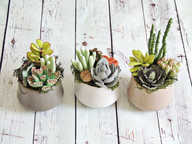 Arredamento Piante ~ Oltre fantastiche idee su piante decorative su