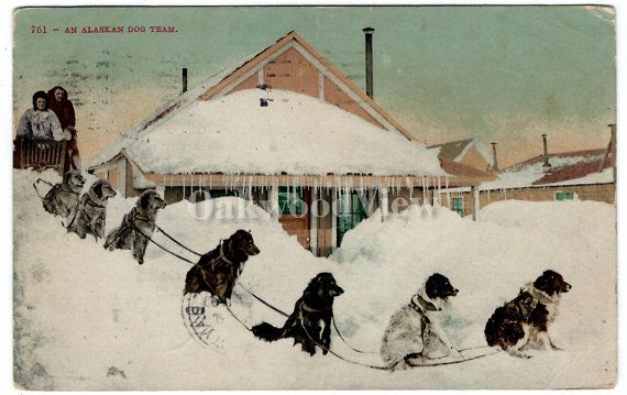 Alaskan Dog Sled Team Postcard, Alaska, Winter Snow Storm, 1909 Antique Color Ephemera, FREE SHIPPING $9.75 by OakwoodView