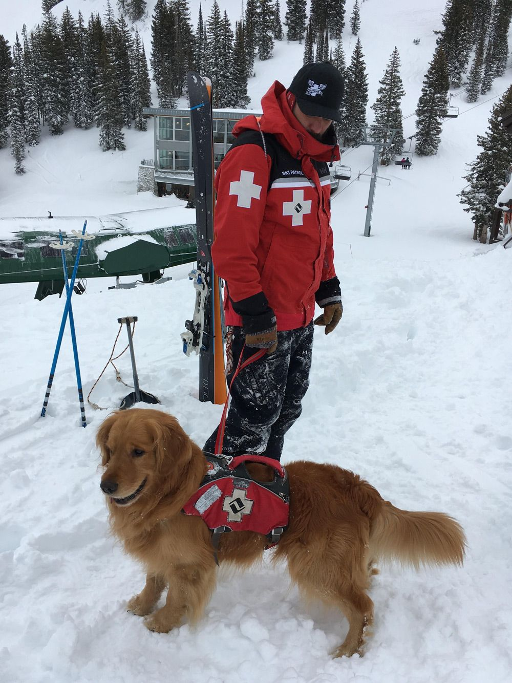 Ruffwear Takes Design To New Heights For Ski Patrol And Sar Dogs