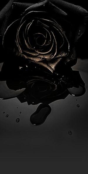 Black Rose | Black rose flower, Black flowers, Black aesthetic wallpaper