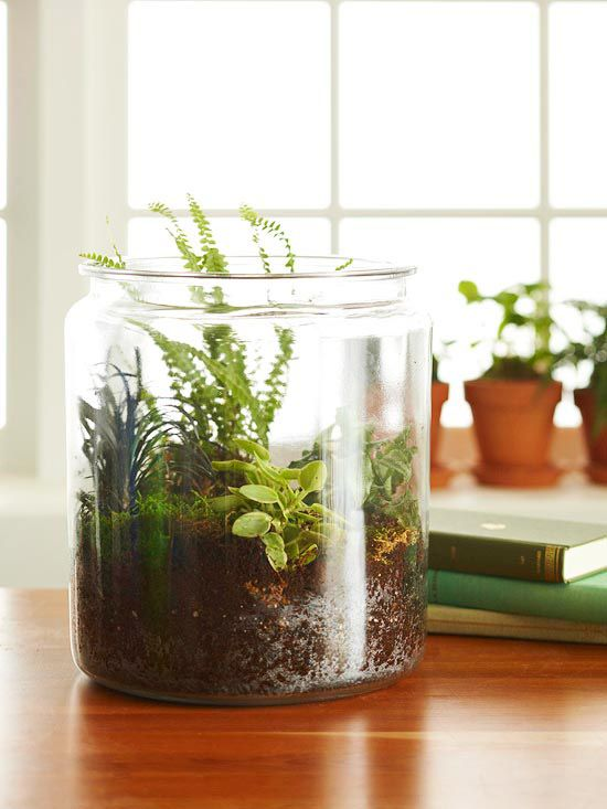 Perk-Up Your Indoor Space: How to Create a Terrarium