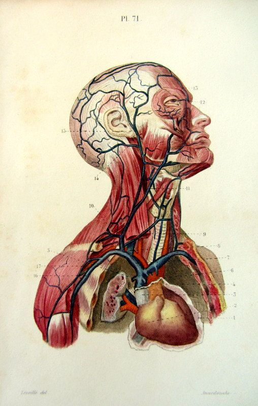 1852 Vintage Human Head Anatomy Print By Lyranebulaprints On Etsy