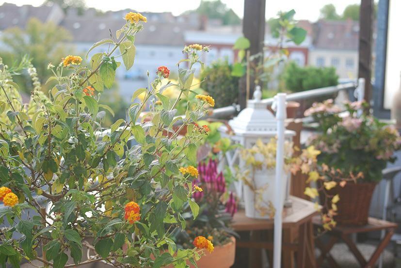 Jetzt ist wieder die Zeit da, in der die Balköne frühlingshaft dekoriert werden können! Nichts ist schöner als bunte Topffplanzen! #frühling #blumen #deko #ideen