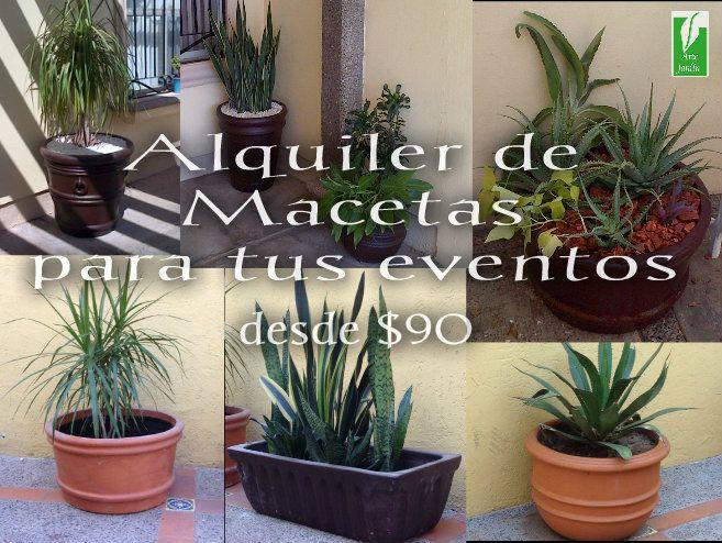 En Arte Jardin Seguimos Ofreciendo Más Opciones Para Nuestros Clientes No Solo Servicios De Jardinería Compra De Plantas Desérticas Y Semide Plants Ideas Para