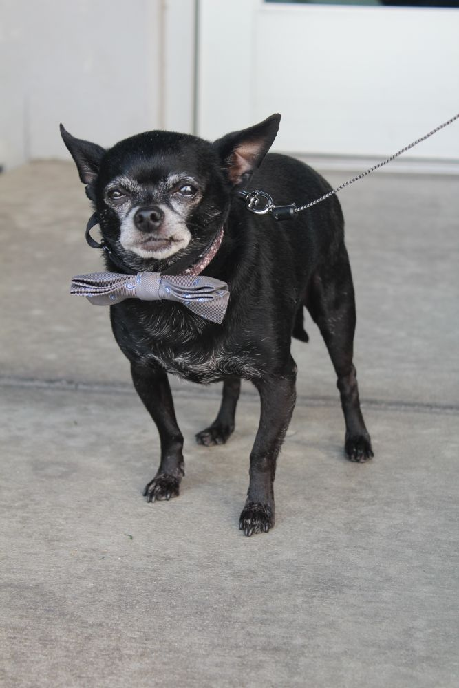 Adopt Tito on Dog adoption, Cat adoption, Adoption