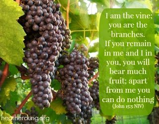Biblical Truth Revealed: KNOW HOW TO ABIDE IN THE TRUE VINE SO AS TO BEAR F...