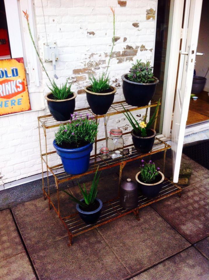 Cactus planten die het houden bij hoge temperaturen en veel zon!