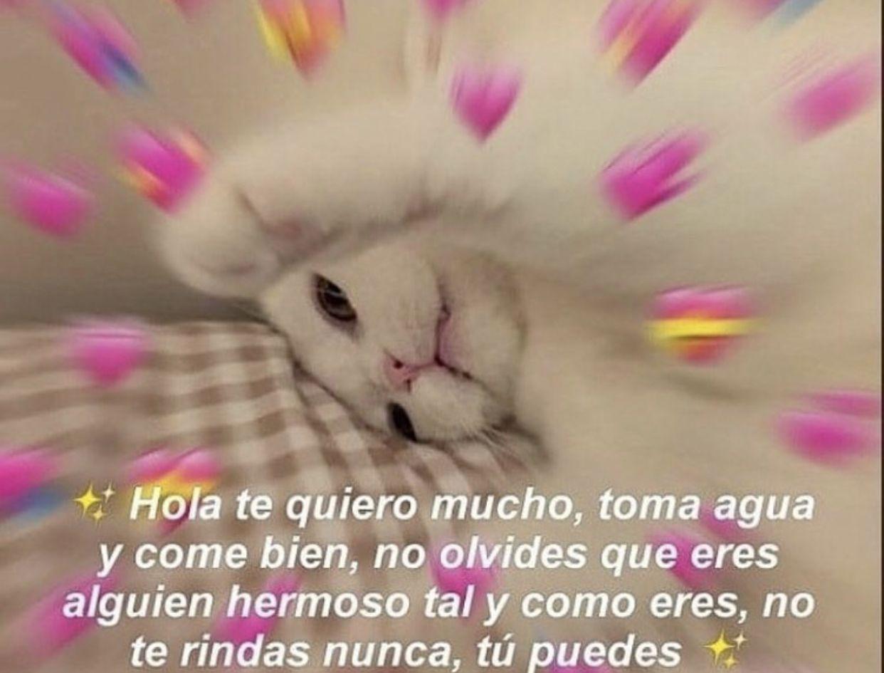 Adorableee Romantic Memes Cute Love Memes Cute Memes