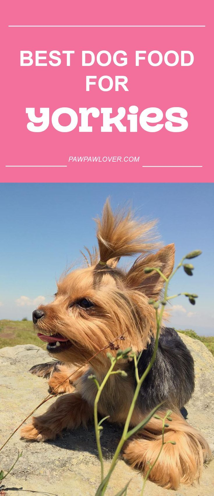 best food for my yorkie puppy