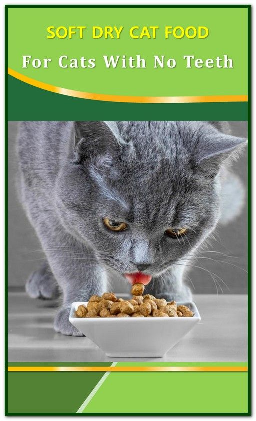 Soft Dry Cat Food For Cats With No Teeth Cat food, Dry