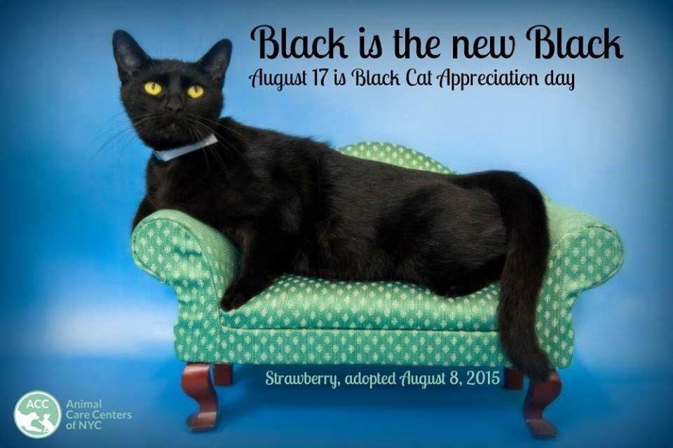 Search Black Cat Appreciation Day Black Cat Adoption Black Cat