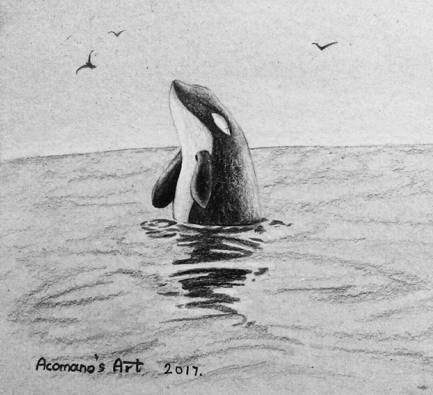 killer whale sketch drawing art my draw pinterest killer