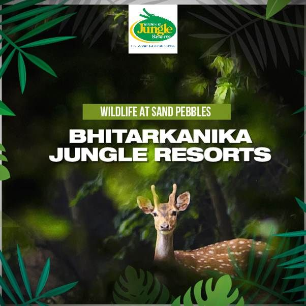Witness the famous White Crocodile, King Cobras, Pythons, Deer and all other  major attractions of animal world at Sand Pebbles Bhitarkanika Jungle Resorts. #BhitarkanikaJungleResorts #Wildlife #JungleSafari