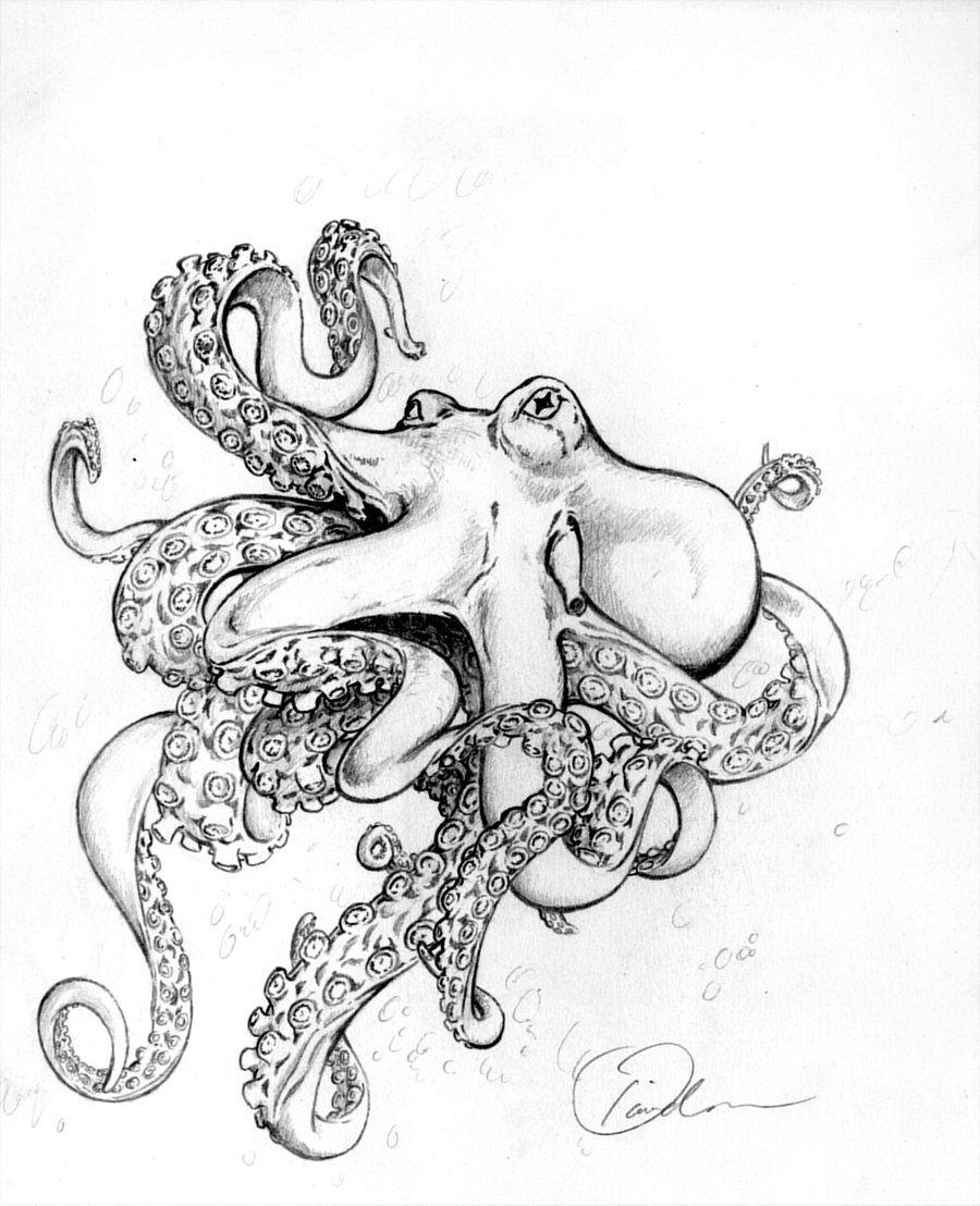 Octopus drawings octopus by weebeastlings traditional for Simple octopus drawing