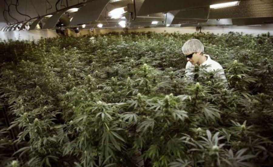 Lo que aún no te han contando sobre la legalización de la marihuana en Uruguay - http://growlandia.com/marihuana/lo-que-aun-no-te-han-contando-sobre-la-legalizacion-de-la-marihuana-en-uruguay/