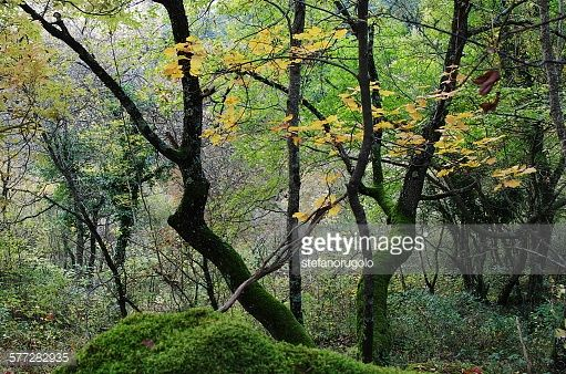 Foto stock : Autumn forest
